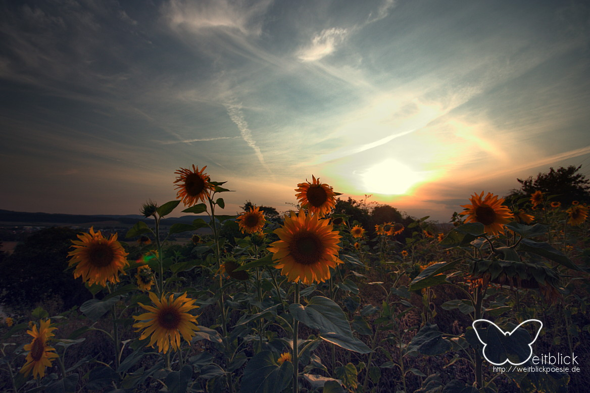 Erntegeruch und Sonnenblumenfelder.