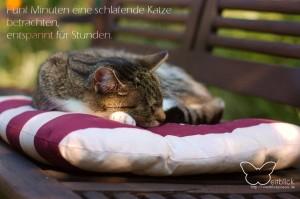 Katze auf dem Kissen