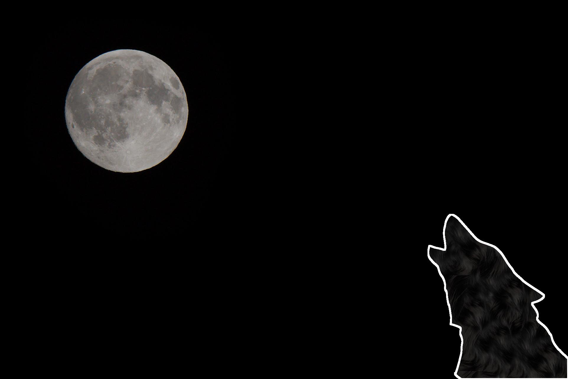 Frau Luna und der Wolf